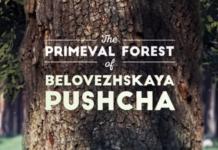 Беловежская пуща, национальный парк
