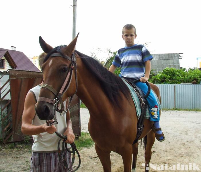 иппотерапия, лошадь
