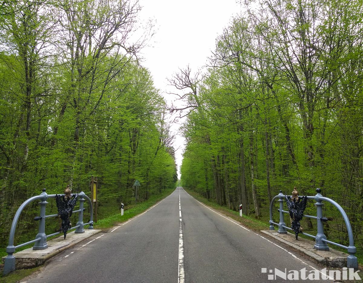 Беловежская пуща, Белавежская пушча, царская дорога в пуще, Беларусь