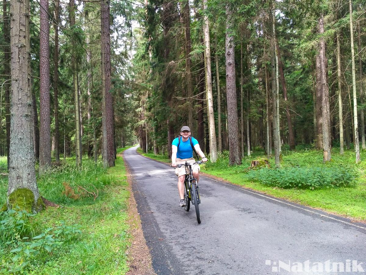 Беловежская пуща, Белавежская пушча, велосипед, на ровары, лес
