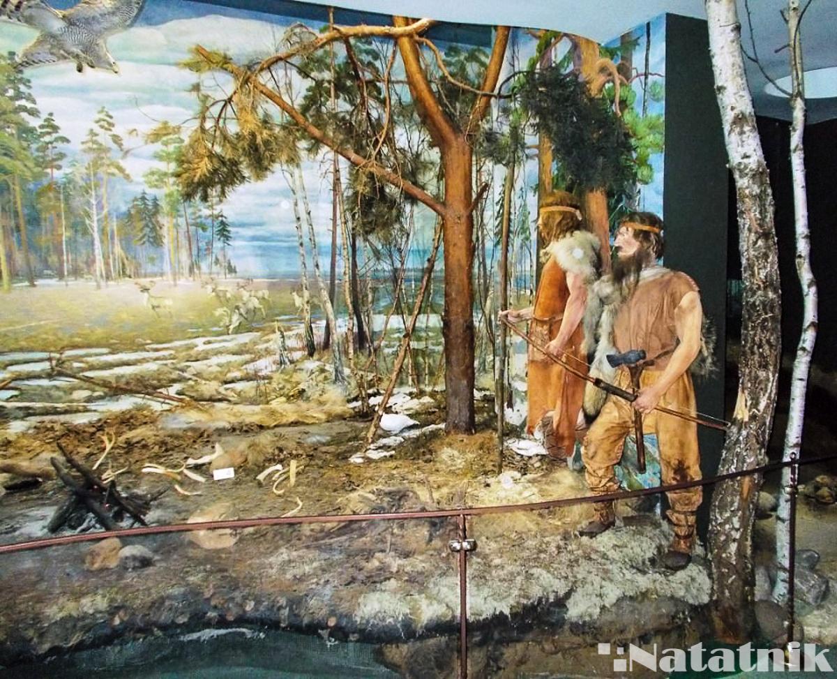 Беловежская пуща, Белавежская пушча, музей природы, музей в пуще, Беларусь, охота