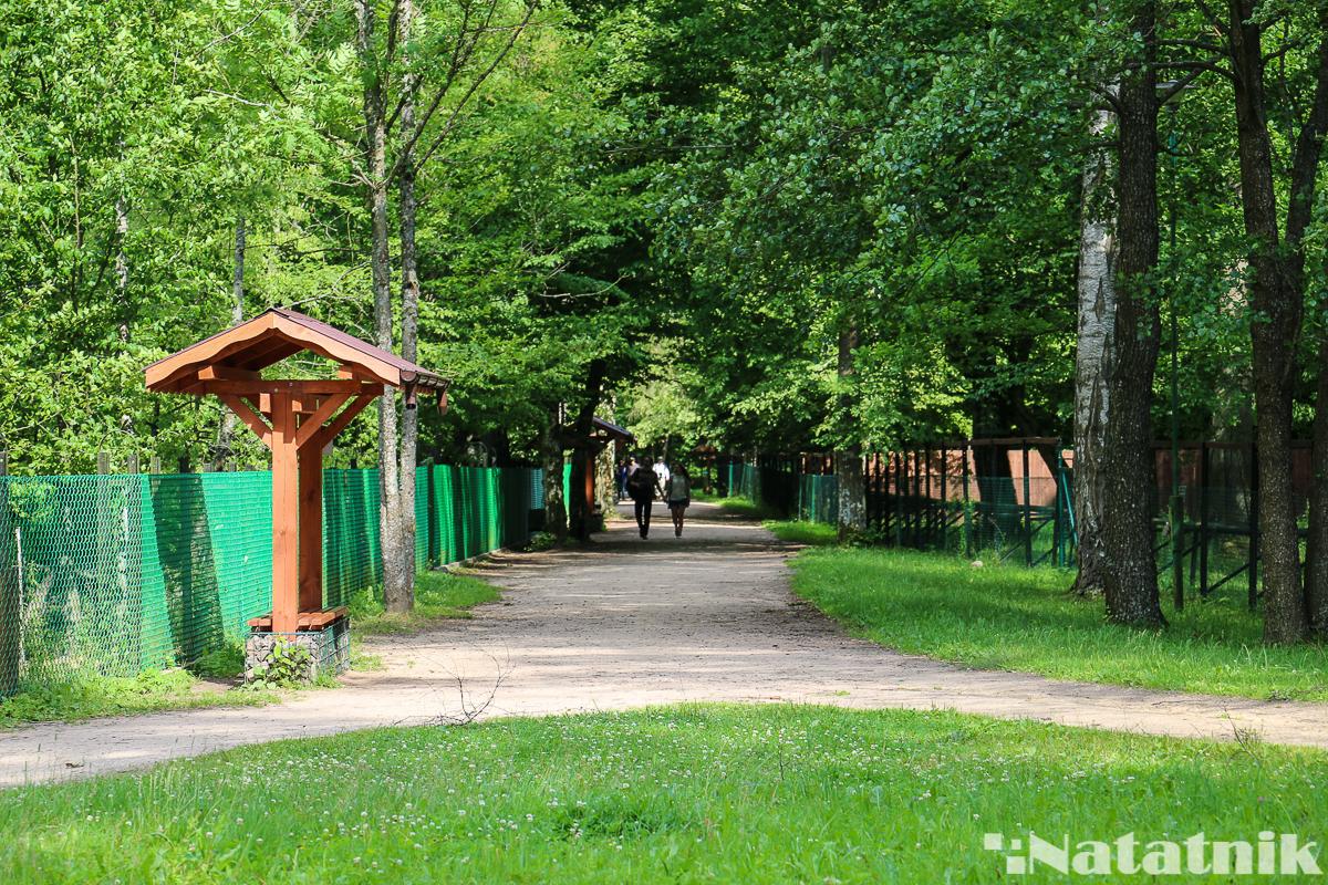 Беловежская пуща, Белавежская пушча, вольеры, Белавежа, Польша