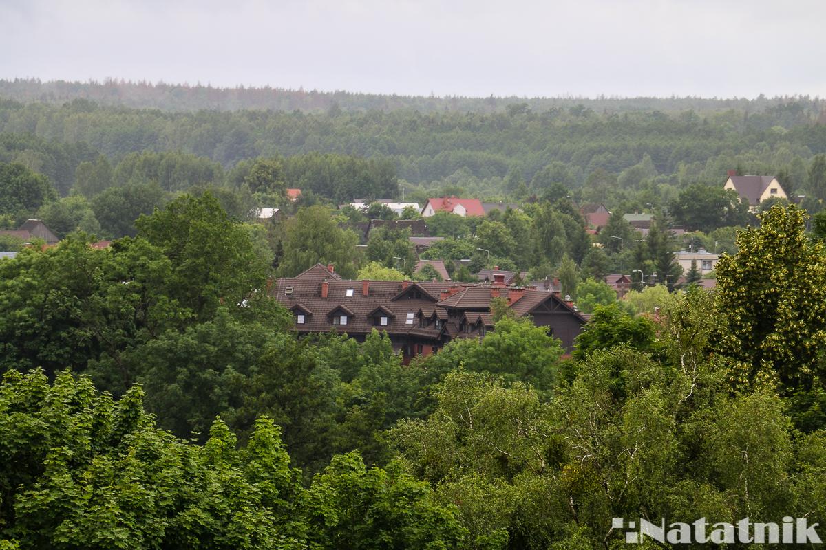 Беловежская пуща, Белавежская пушча, вид с башни, Белавежа